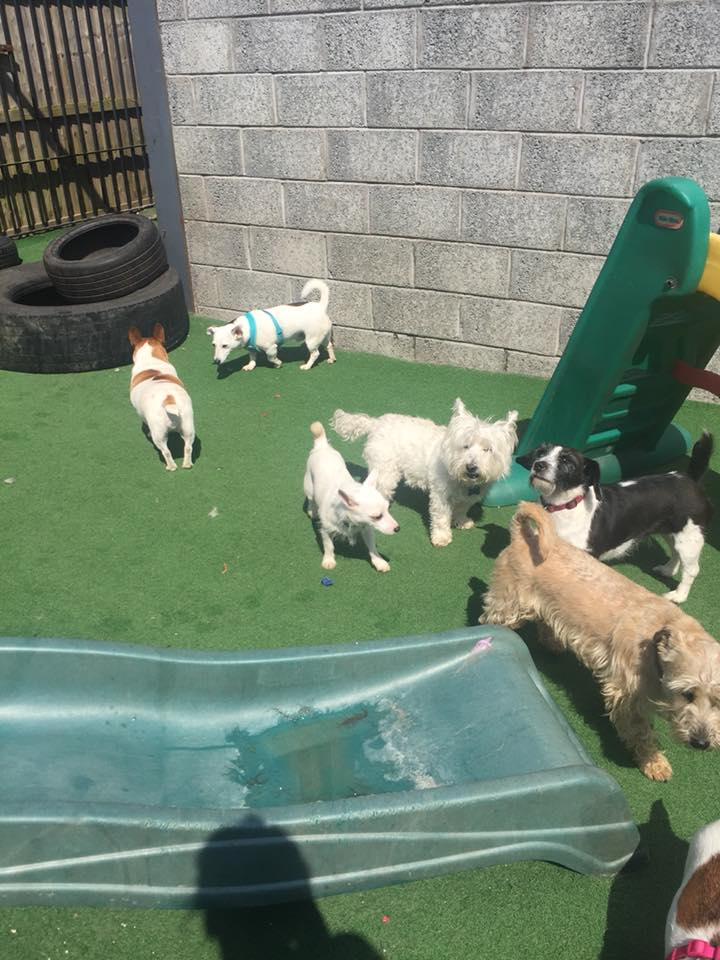 dog day care