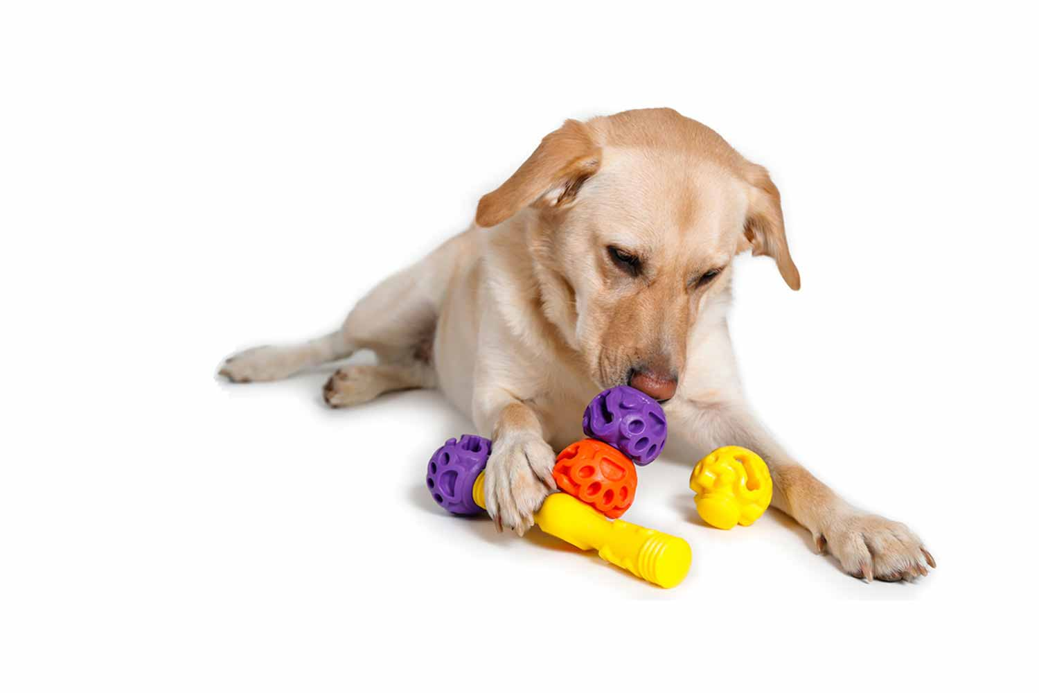 Foraging Toys For Dogs – Wow Blog