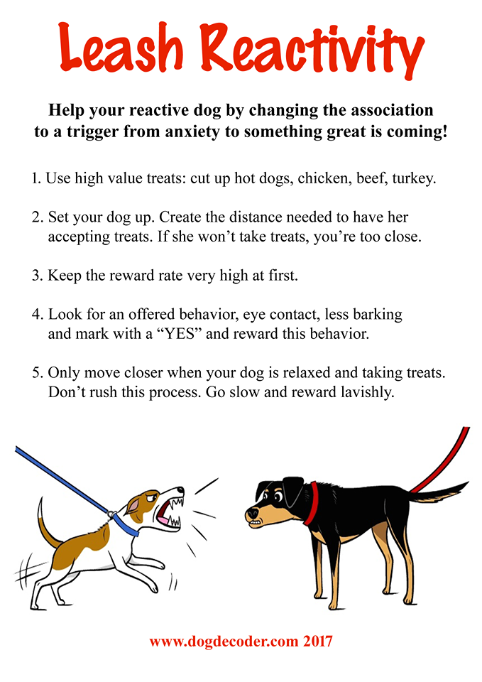 Best Ways To Help A Nervous Dog
