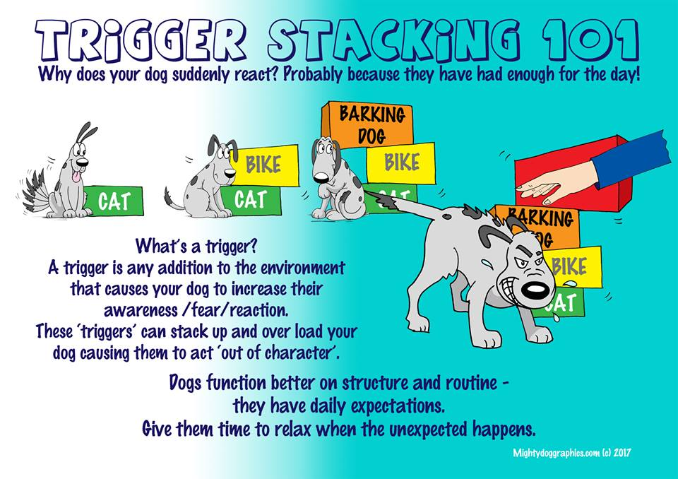 Is Your Dog Stressed Know The Signs
