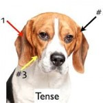 dog body language, signs of dogs in pain
