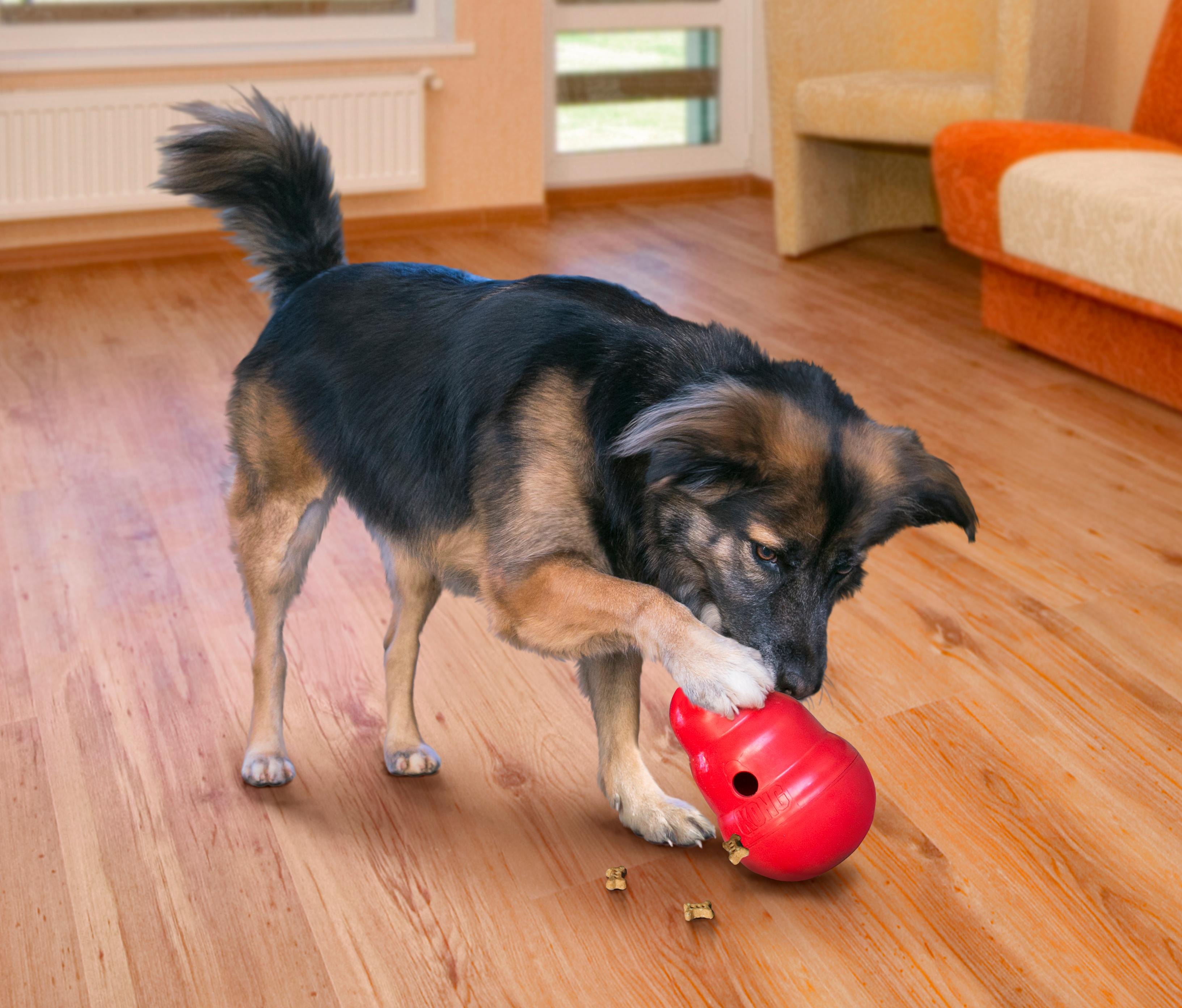 Dog Toys: How to Choose Safe and Appropriate Toys