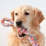 Dog Toys: Choose Safe and Appropriate Toys